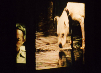 The Blair Bush Project (Film Installation)